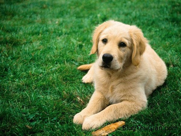 dog jpeg 1375257890 600x0 Nộp phạt 11.000 USD vì xâm hại tình dục chó