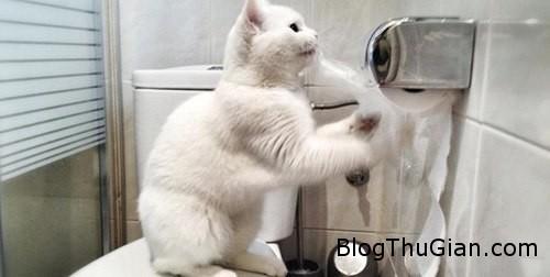 pets 657912 1368275368 600x0 Trung Quốc bỏ tiền xây nhà vệ sinh công cộng cho chó mèo