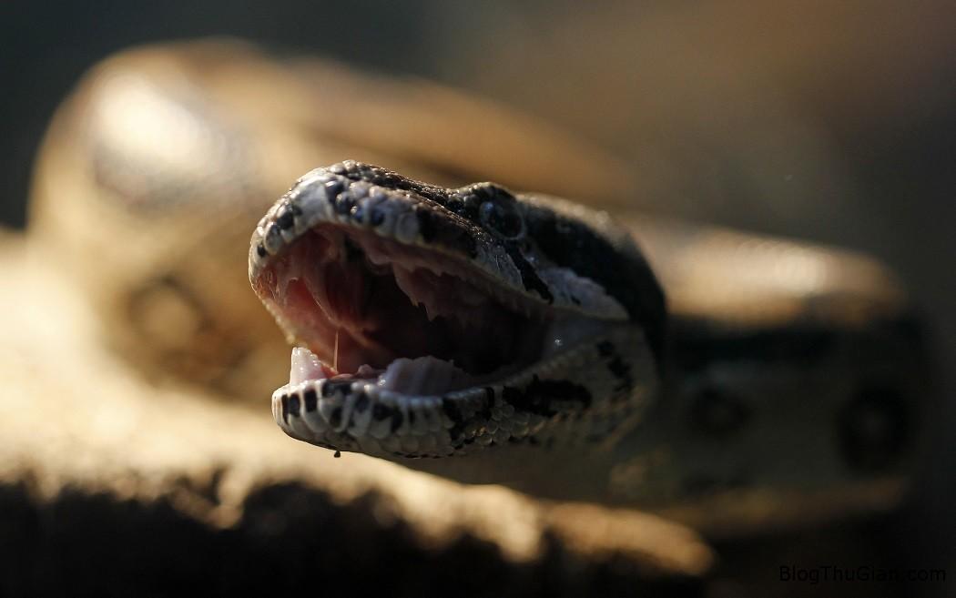 be 17 thang tuoi can chet ran doc Bé trai 17 tháng tuổi cắn chết rắn cực độc