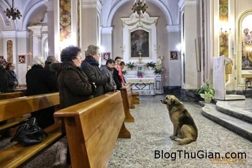 dog 762533 1368260723 600x0 Chú chó trung thành ngồi đợi chủ đã mất ở nhà thờ