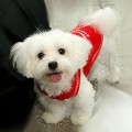 dog1-860714-1368251043_500x0