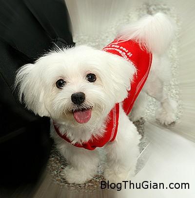 dog1 860714 1368251043 500x0 Bị kiện vì dùng tên hàng xóm đặt cho chó