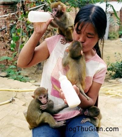 monkey2 683883 1368272582 500x0 Cô gái cho khỉ bú sữa của mình