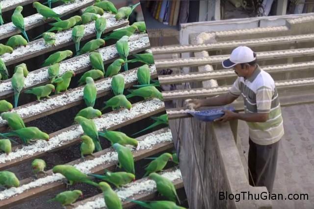nguoi dan ong 10 nam hao phong nuoi chim troi Nuôi cơm cho 4000 con vẹt suốt 10 năm
