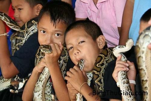snake 565422 1368275936 500x0 Ngôi làng xem rắn như vật cưng