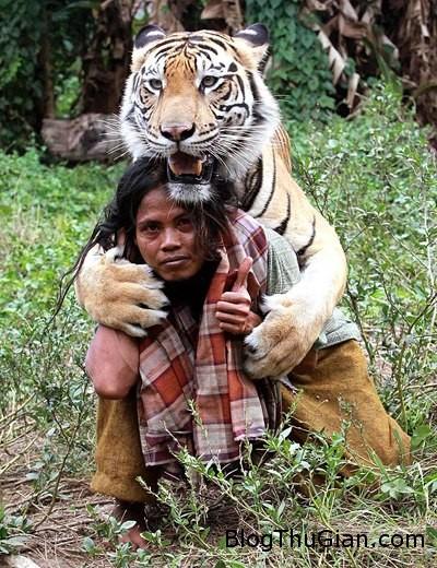 tiger1 859682 1368292137 500x0 Làm bạn thân với hổ