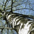 tree-770342-1368264165_500x0