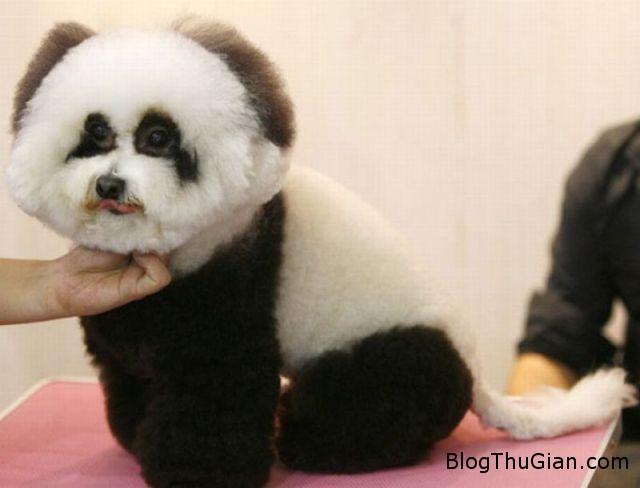 trung quoc xuat hien gau cho1 Gấu chó xuất hiện ở Trung Quốc