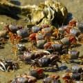 VNE-Crab-8565-1448101327