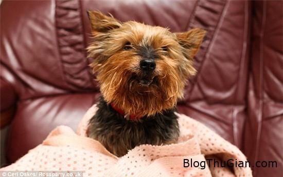 chu cho da 25 tuoi nhung van bi nham la cho con 1 Chú chó nhiều tuổi nhất Anh Quốc vẫn bị nhầm là chó con