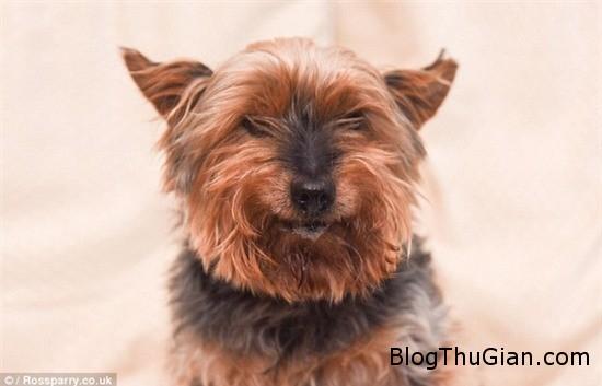 chu cho da 25 tuoi nhung van bi nham la cho con 3 Chú chó nhiều tuổi nhất Anh Quốc vẫn bị nhầm là chó con