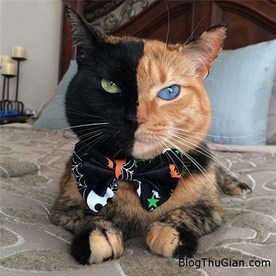 co meo co khuon mat nua den nua cam bong choc tro thanh ngoi sao tren internet 1 Chú mèo nửa đen nửa cam gây sốt trên cộng đồng mạng