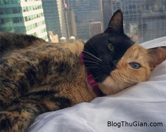 co meo co khuon mat nua den nua cam bong choc tro thanh ngoi sao tren internet 4 Chú mèo nửa đen nửa cam gây sốt trên cộng đồng mạng