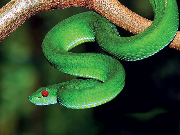 giaimagiacmo56 Giải mã giấc mơ thấy rắn & nằm ngủ mơ thấy rắn độc
