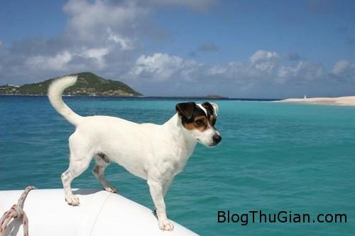 skipper 4789 1447834349 Chú chó đi du lịch nhiều nhất thế giới