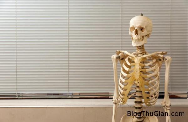 suot 40 nam giang day bang xuong nguoi Giảng dạy bằng bộ mô hình xương người thật suốt 40 năm