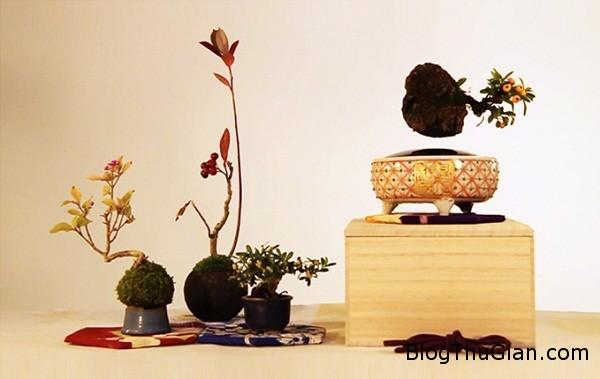 11058 Cây bonsai có thể bay lơ lửng và xoay tròn trên không trung