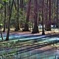 VNE-Swamp-3830-1453364460