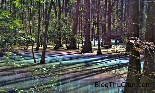 VNE Swamp 3830 1453364460 Sửng sốt với vẻ đẹp của đầm lầy cầu vồng ở Florida