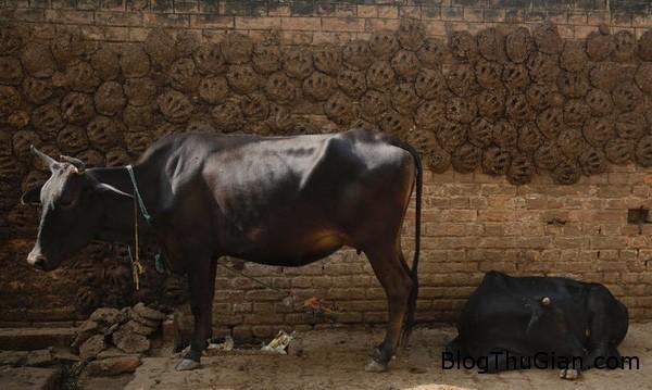 a1 1451645528064 Bánh phân bò được mua bán trực tuyến trên mạng