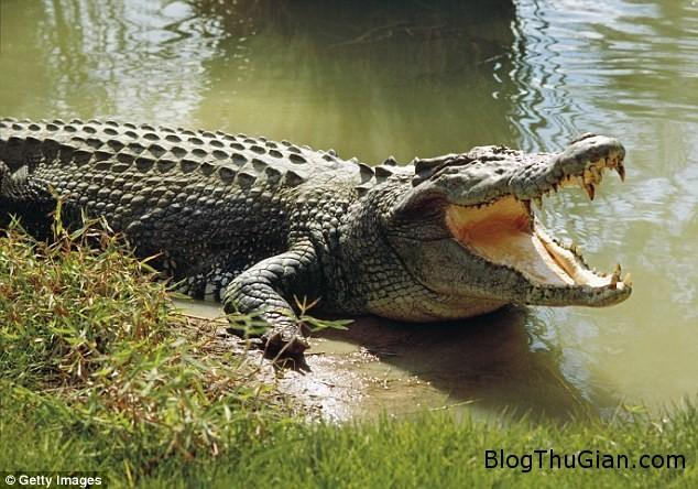 dat cho di dao nguoi phu nu bi con ca sau hung du can dut tay Bị cá sấu cắn đứt tay khi đang dắt chó đi dạo