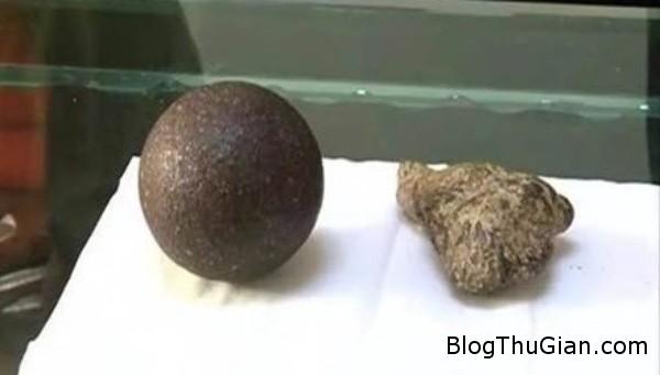 phat tai vi tim thay than duoc trong bung cuu Phát hiện dược liệu quý trong bụng cừu