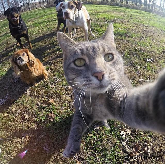 tinhhoa.net CxFfYn 20160117 nhung buc anh selfie khong the doc dao hon cua chu meo thong thai Chú mèo nổi tiếng với những bức ảnh selfie độc đáo