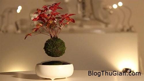 tinhhoa.net uGnbyR 20160126 ky thu loai cay bonsai lo lung giua khong trung Cây bonsai có thể bay lơ lửng và xoay tròn trên không trung
