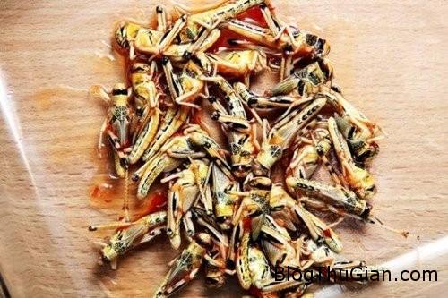 chang trai an 16000 con sau bo vi nghien1 Chàng trai nghiện ăn côn trùng, sâu bọ