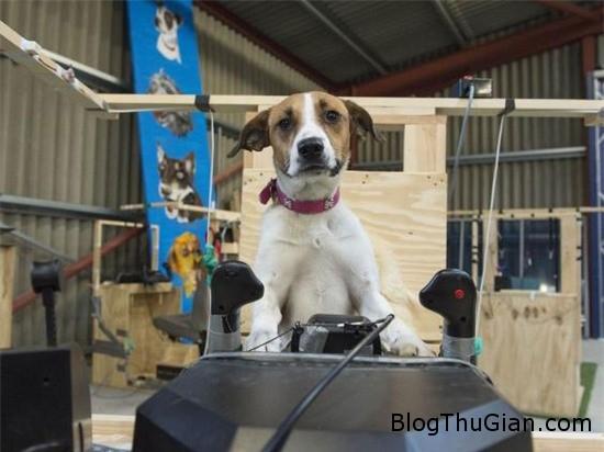 cho cung co the lai may bay nhu con nguoi 2 Chương trình truyền hình đào tạo phi công chó