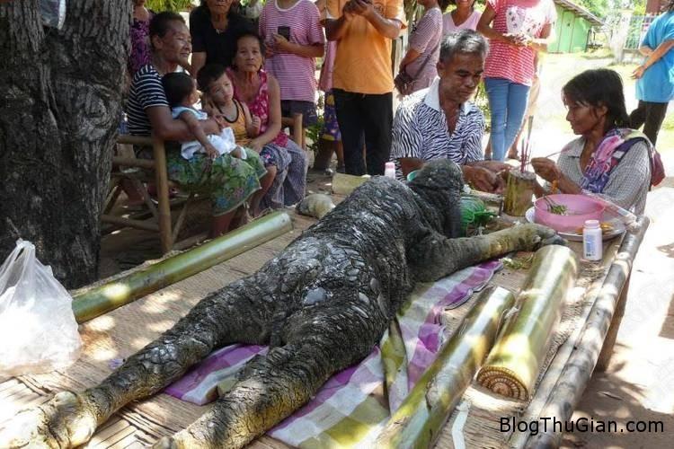 chuyen la the gioi quai thu 2  Phát hiện quái thú cá sấu mình trâu kỳ lạ ở Thái Lan