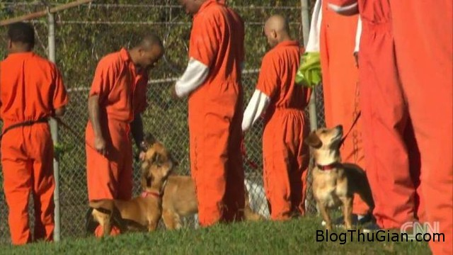 nha tu cho phep pham nhan lam ban 247 voi cho1 Nhà tù cho phép phạm nhân làm bạn với chó