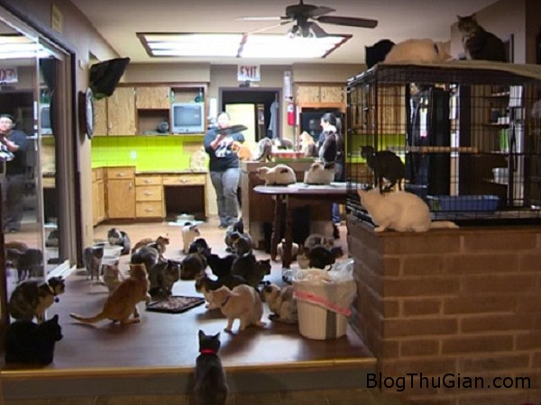 nuoimeo Người phụ nữ sống chung với hơn 1.100 chú mèo trong nhà